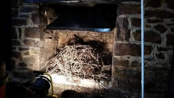 Devon Chimney Sweeps And Stove Installations Bird Nest
